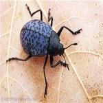 7-id-the-bugs